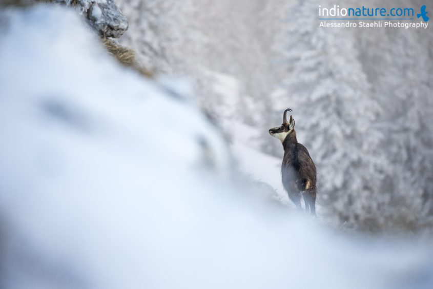 Calendrier Indionature 2019 - making of